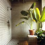 A cluster of tall house plants for semi outdoor shower space