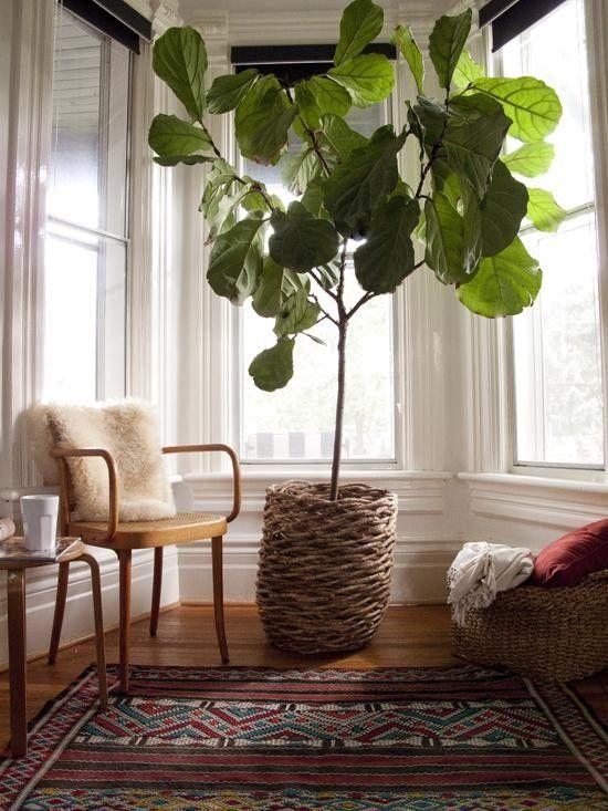 Interior Plants Corner
