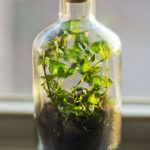 Glass Bottle Container With Plants And Sand Inside