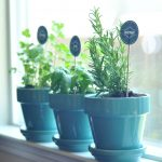 Herb Garden With Blue Pots Near Kitchen Window