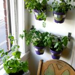 Indoor Kitchen Herb GArden Vertical With Blue Pots