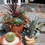 Outdoor Planters With Cactus