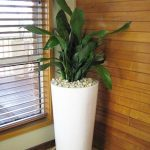 Tall house plant as corner decorative item