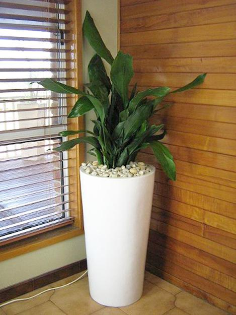 Tall House Plants for Indoor: The Most Recommended Ones ...