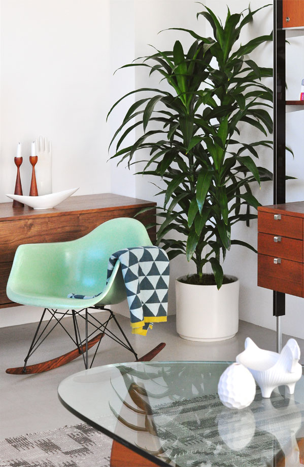 Tall House Plants for Indoor: The Most Recommended Ones