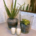 elegant-and-cool-aloe-vera-in-transparent-container-for-indoor-plants-placed-in-the-bathroom-with-mirror-and-white-wall