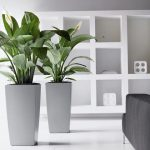 elegant white interior with black sofa and unique indoor plants on tall white pots and wall storage