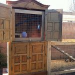 fully-'furnished'-chicken-coop-created-from-unused-furniture-or-cabinet-in-the-backyard-near-plants-and-wall