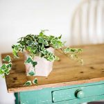 gorgeous wooden table with green drawer and small potted plant beneath white concrete siding