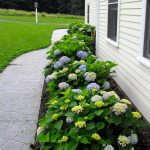 home garden beneath vunyl siding idea aside concrete walk way with yellow and blue endless summer hydrangeas