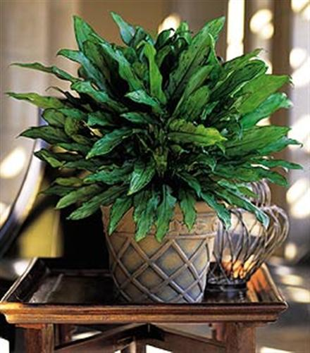 House Plants For Shady Rooms: Decorate Your Shady Areas With Beautiful Shade-Loving