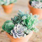 summer hydranglea for unique indoor plants idea on woooden table with orange pots