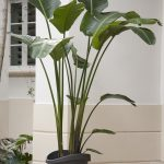 tall decorative plant on black pot as terrace decoration