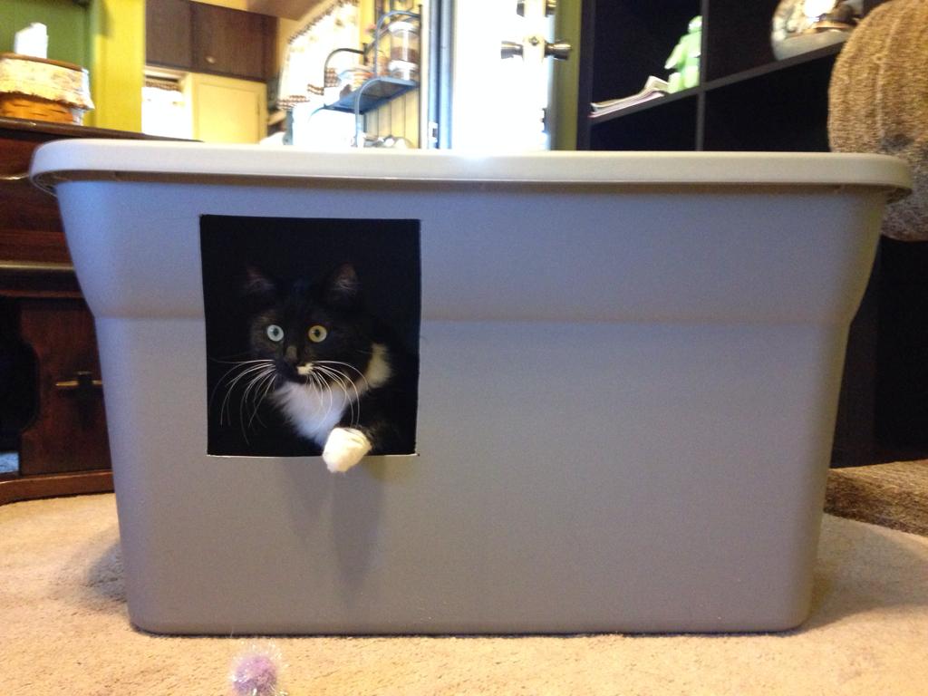 Cat In A Box In A Pool
