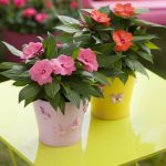 best interior decoration idea with indoor plant on pink and yellow pot on yellow table with red and pink flowers