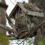 creative-and-decorative-birs-house-with-rustic-style-for-camouflaging-from-predators-and-help-blend-the-nesting-box-into-the background