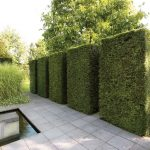 Green plant fence idea for outdoor