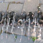 Moles on traps
