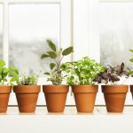 Indoor Herb Garden For Kitchen Hebs