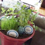 Kitchen Herb In One Pot With Names