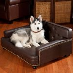 Dark brown leather couch with a lovely husky