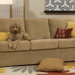 Light brown couch with throw pillows which is friendly for dog