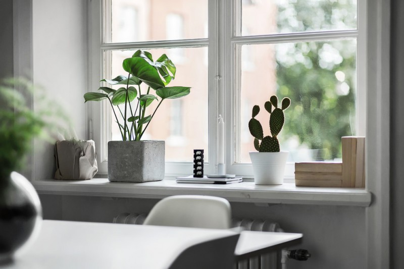 window decorating idea tiny houseplant on concrete pot little succulent on white pot