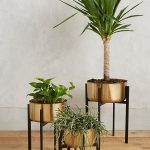 Gold Toned Iron Pots For Houseplants With Black Stand