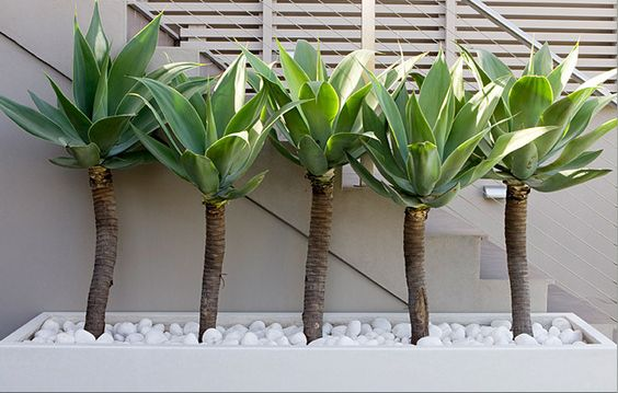 backyard idea with palm like plants in conrete planter