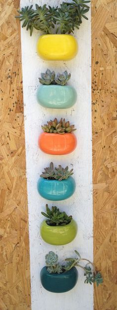 modern wall planters in pop of colors