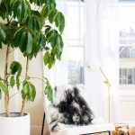 Weird Curve Shape Space Of Living Room Huge Houseplant In White Pot Modern Rocking Chair With Metal Legs White Drapes With Black Wrought Iron Rings & Supports