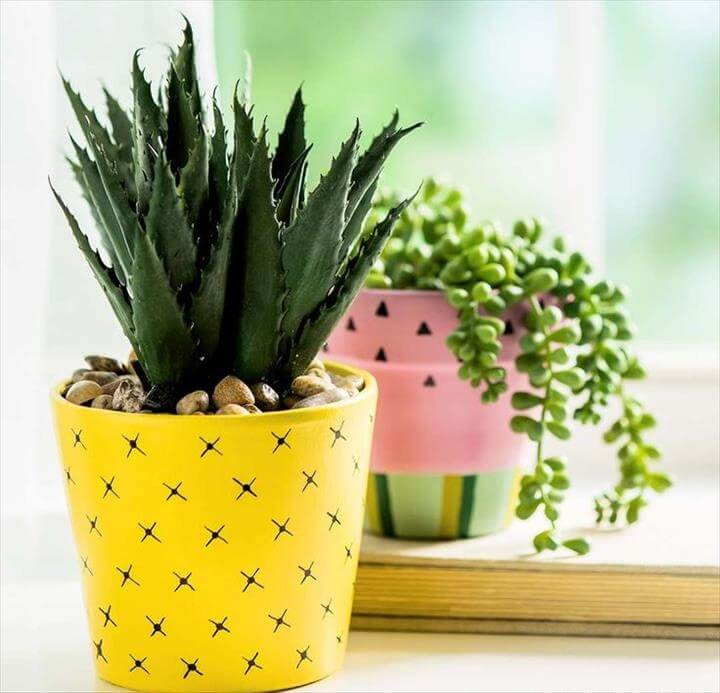 DIY pineapple planter for suculants