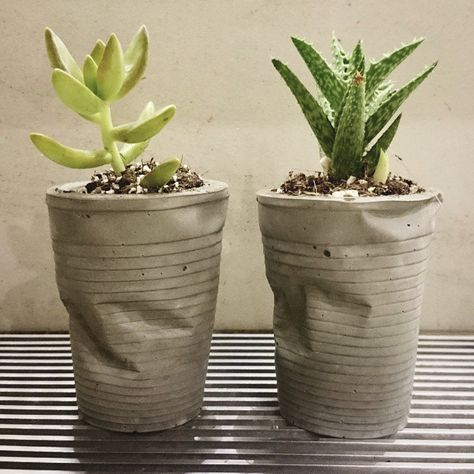 crushed can planters with growing succulants