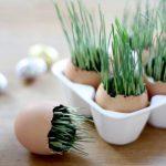 Half Broken Egg Shell Planters For Small Houseplants