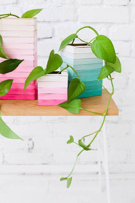 rainbow stick planters with freshly green leavy houseplants
