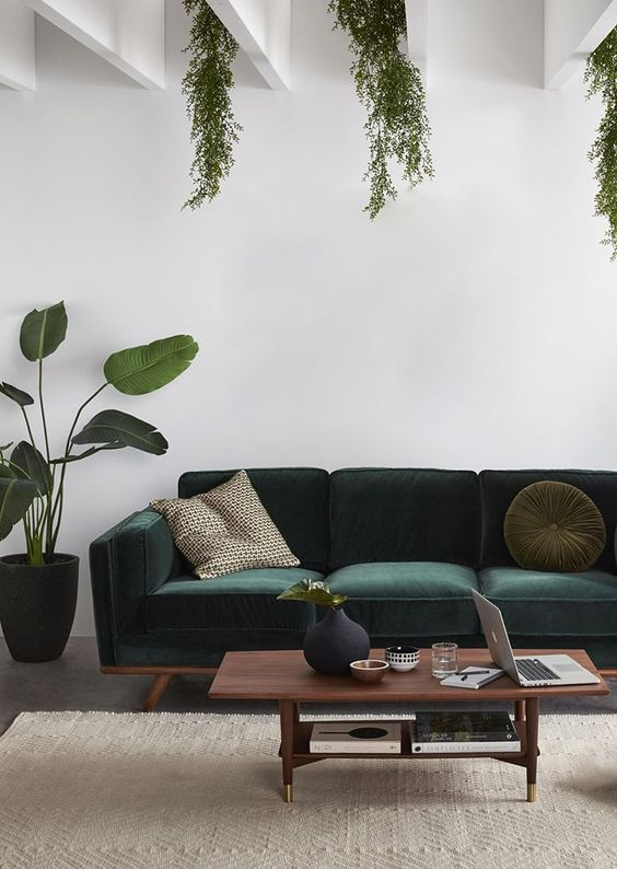 dark green velvet sofa in midcentury modern style dark wood coffee table potted houseplant hanging greenery