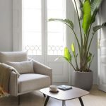 Small Seating Area Modern Armchair In Soft Tone Wood Top Modern Coffee Table Tropical Houseplant With Gray Concrete Planter