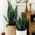 Woven Planter With Houseplants White Planter With Houseplants Hardwood Console Table In Midcentury Modern Style