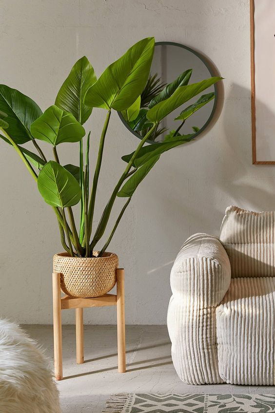 woven planter with light wood stand huge houseplants velvet modern sofa in broken white with stripe texture