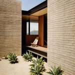 Exotic Outdoor Plants With Concrete Slab Backdrops