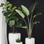 Tropical Houseplants In White Concrete Planters