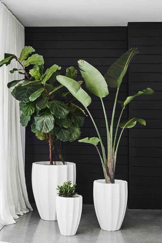 tropical houseplants in white concrete planters