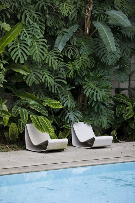 ultramodern outdoor chairs in white huge plant as the backdrop of the chairs